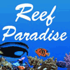 Reef Paradise - Venustus Angelfish